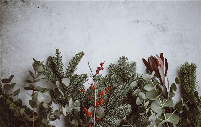 Brad, eucalipt, fructe roșii, de Annie Spratt